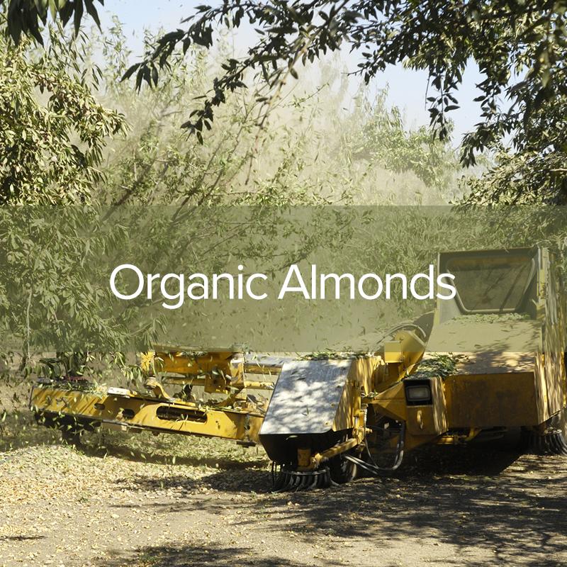 organic-almonds1